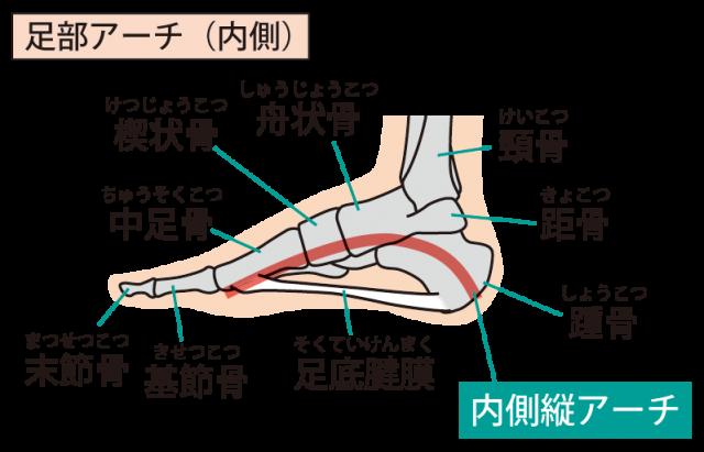 足部の構造